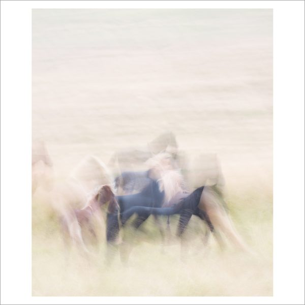 HORSES IN MOTION - 103 LIMITED EDITION PRINT