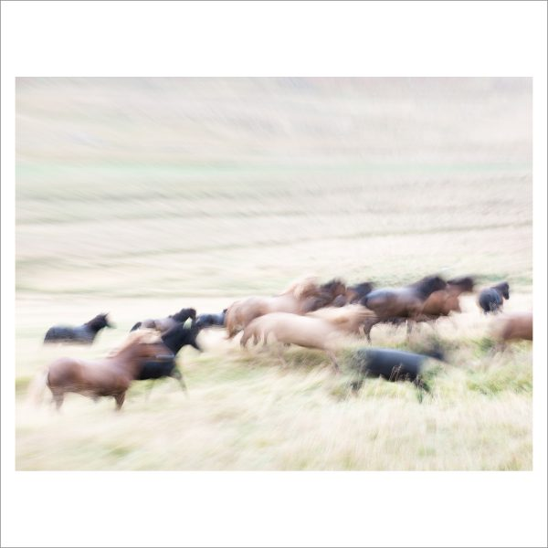 HORSES IN MOTION - 104 LIMITED EDITION PRINT