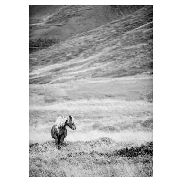 HORSES IN MOTION - 105 LIMITED EDITION PRINT