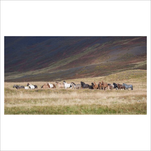 HORSES IN MOTION - 106 LIMITED EDITION PRINT