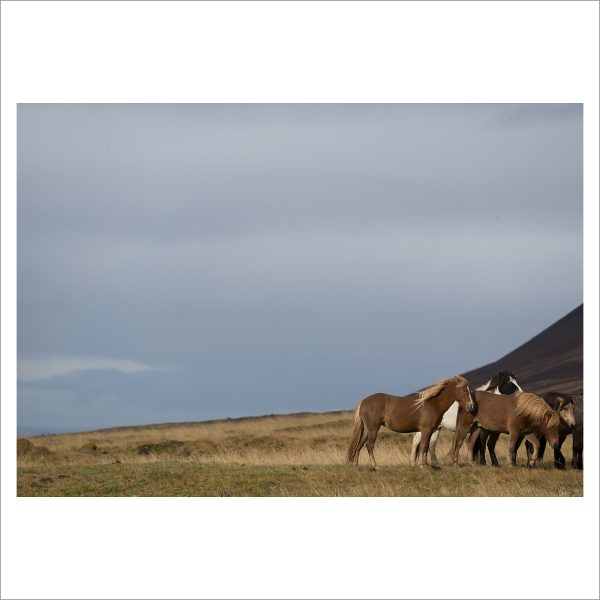 HORSES IN MOTION - 107 - LIMITED EDITION PRINT