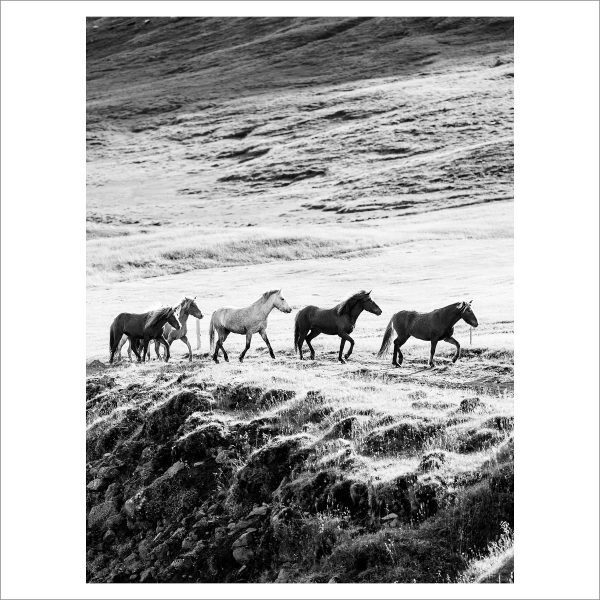 HORSES IN MOTION - 109 - LIMITED EDITION PRINT