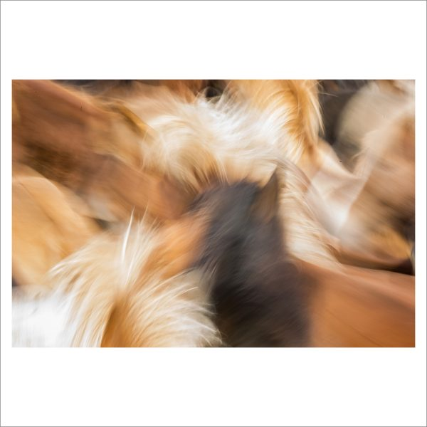 HORSES IN MOTION - 113 - LIMITED EDITION PRINT