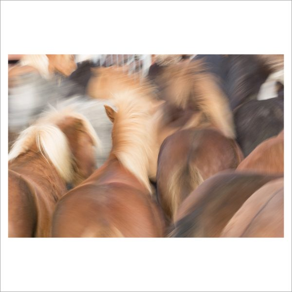 HORSES IN MOTION - 114 - LIMITED EDITION PRINT
