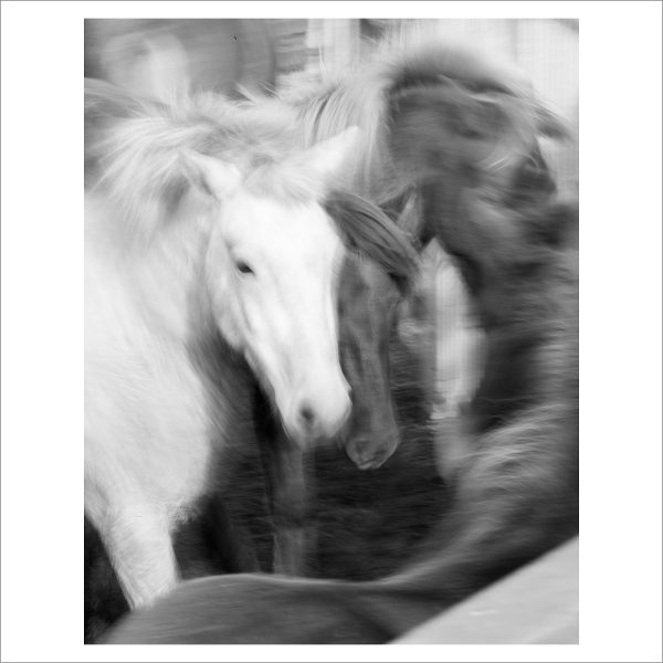 HORSES IN MOTION - 115 - LIMITED EDITION PRINT