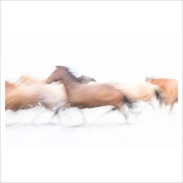 HORSES IN WATER - 117 - LIMITED EDITION PRINT