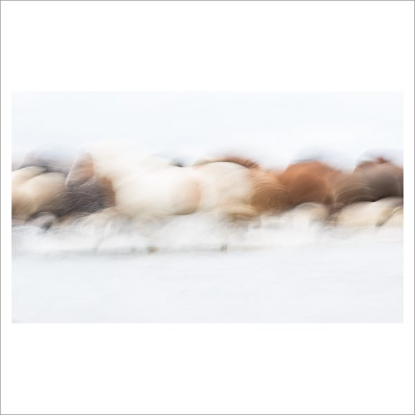 HORSES IN WATER - 118 - LIMITED EDITION PRINT