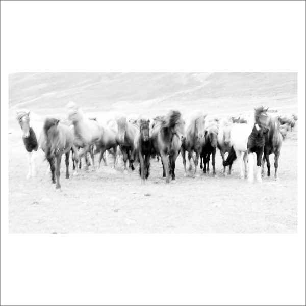 HORSES IN WATER - 120 - LIMITED EDITION PRINT