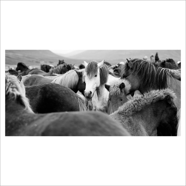 HORSES TOGETHER - 121 - LIMITED EDITION PRINT