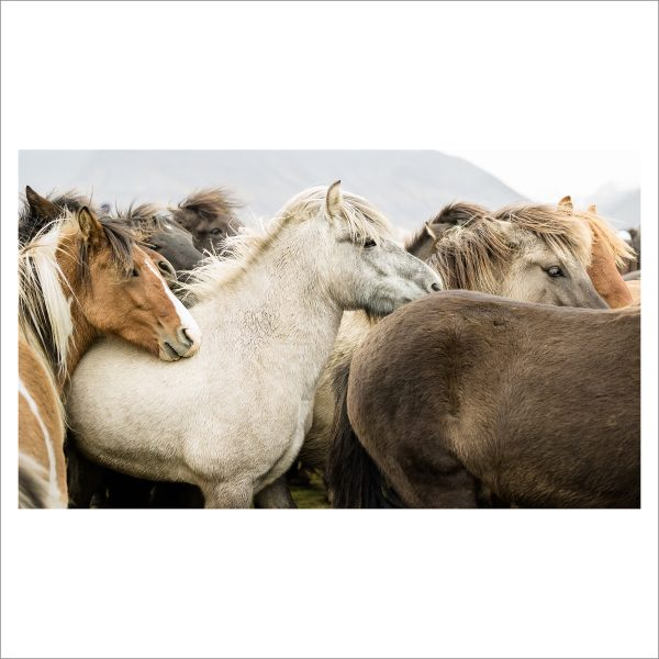 HORSES TOGETHER - 122 - LIMITED EDITION PRINT