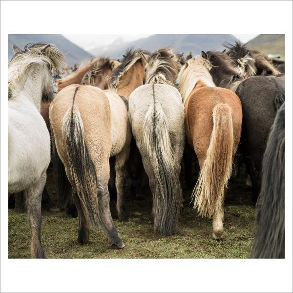 HORSES TOGETHER - 123 - LIMITED EDITION PRINT