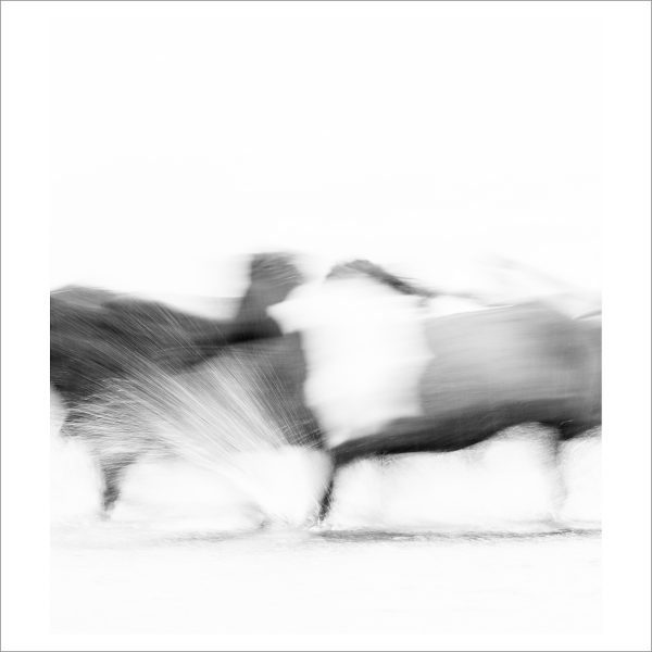 HORSES IN MOTION - 124 - LIMITED EDITION PRINT