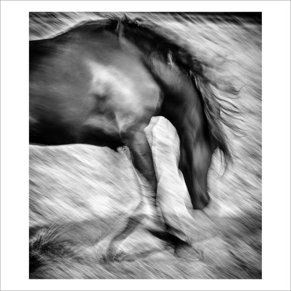 HORSE IN MOTION - 127 - LIMITED EDITION PRINT