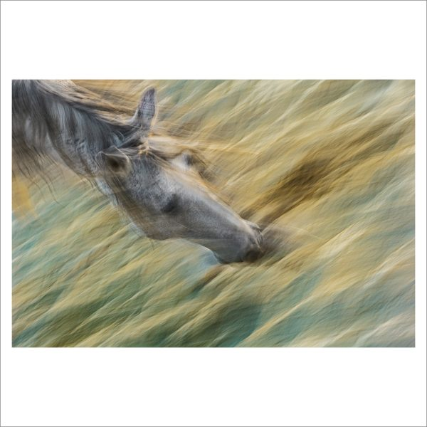 HORSE IN MOTION - 128 - LIMITED EDITION PRINT