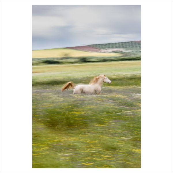 HORSE IN MOTION - 129 - LIMITED EDITION PRINT