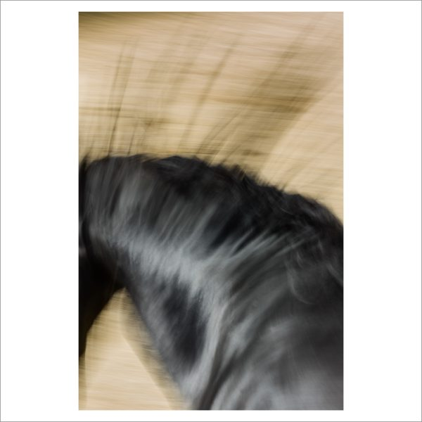 HORSE IN MOTION - 130 - LIMITED EDITION PRINT