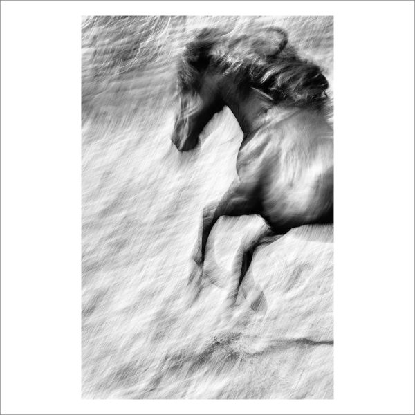 HORSE IN MOTION - 131 - LIMITED EDITION PRINT