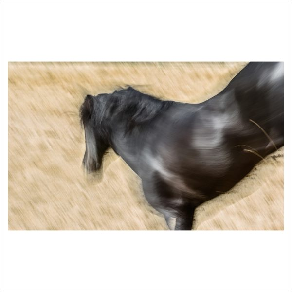 HORSE IN MOTION - 132 - LIMITED EDITION PRINT