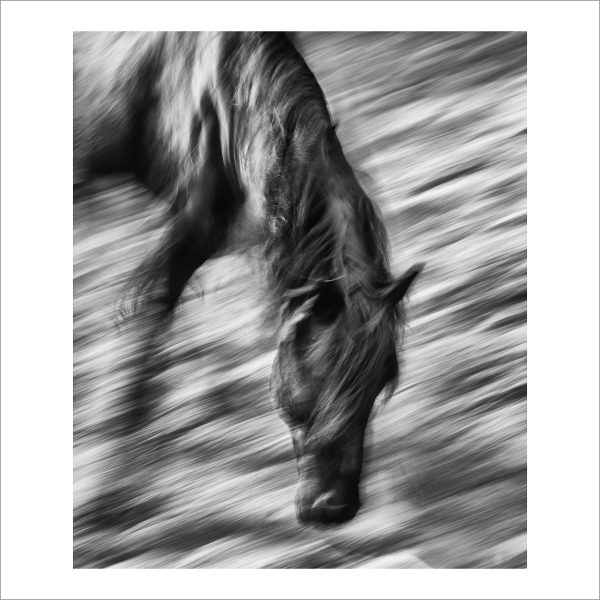 HORSE IN MOTION - 133 - LIMITED EDITION PRINT