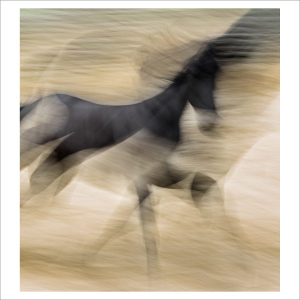 HORSE IN MOTION - 136 - LIMITED EDITION PRINT