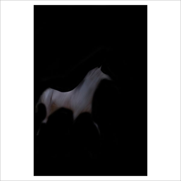 HORSE VISION - 137 - LIMITED EDITION PRINT