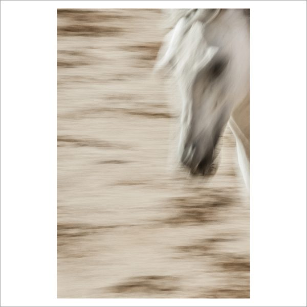 HORSES HEAD - 141 - LIMITED EDITION PRINT
