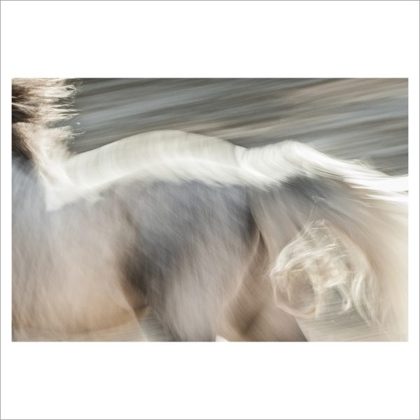 HORSE IN MOTION - 143 - LIMITED EDITION PRINT