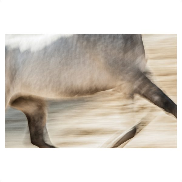 HORSE IN MOTION - 144 - LIMITED EDITION PRINT