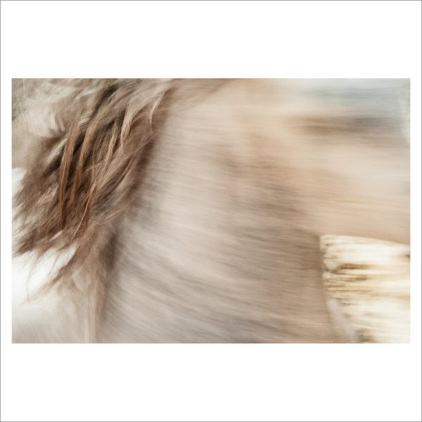 HORSE IN MOTION - 145 - LIMITED EDITION PRINT