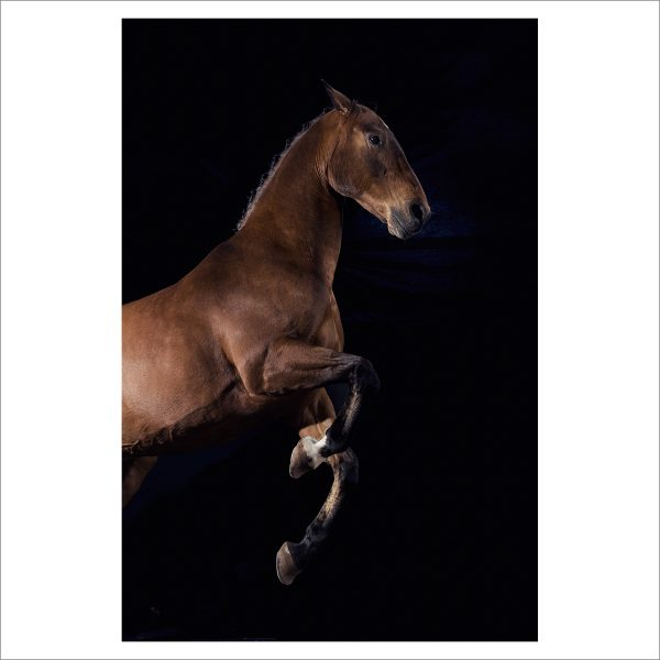 REARING HORSE - 146 - LIMITED EDITION PRINT