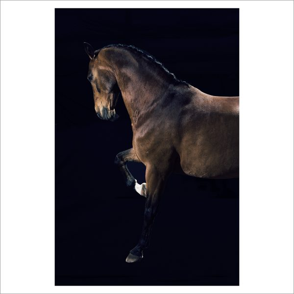 THE HORSE - 151 - LIMITED EDITION PRINT