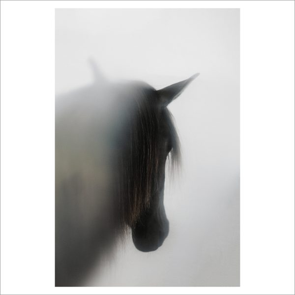 THE HORSE - 154 - LIMITED EDITION PRINT