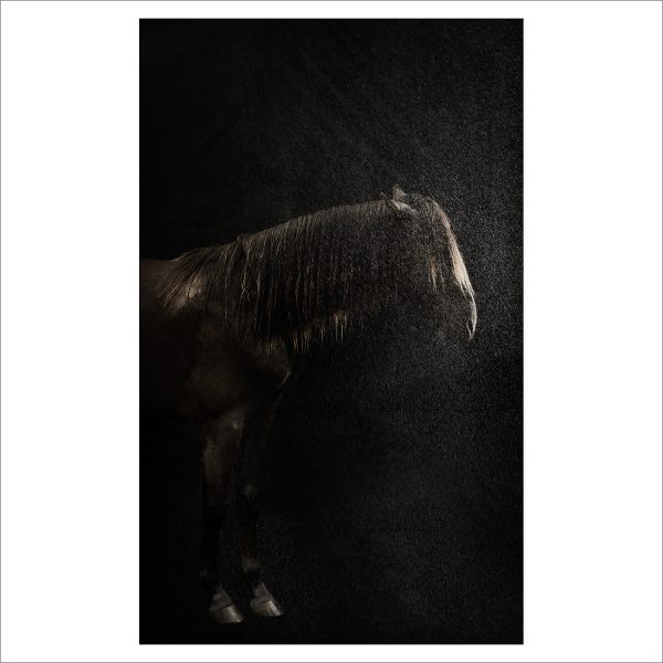 THE HORSE - 156 - LIMITED EDITION PRINT