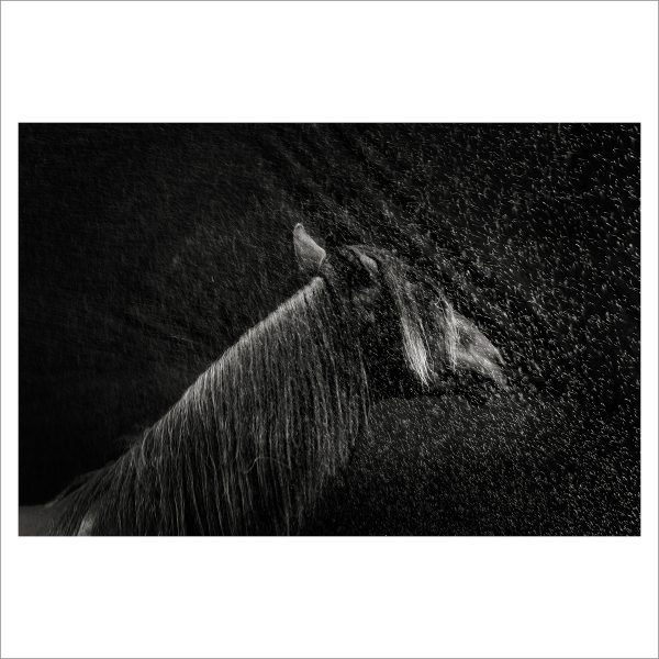 THE HORSE - 157 - LIMITED EDITION PRINT