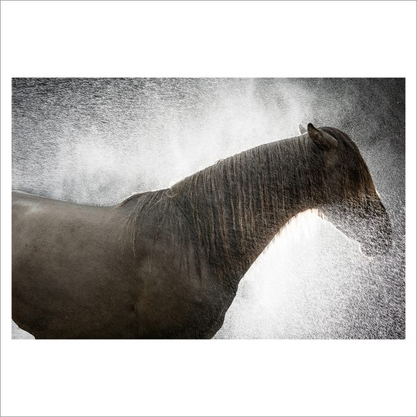 THE HORSE - 158 - LIMITED EDITION PRINT