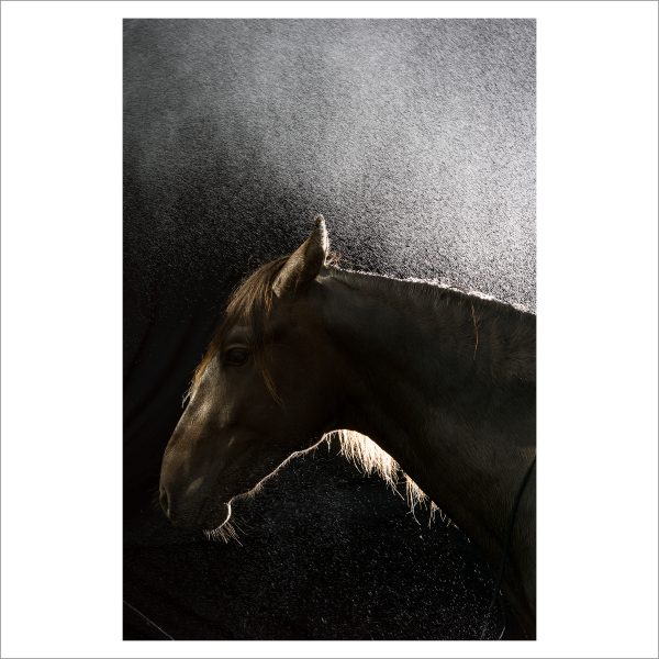 THE HORSE - 159 - LIMITED EDITION PRINT