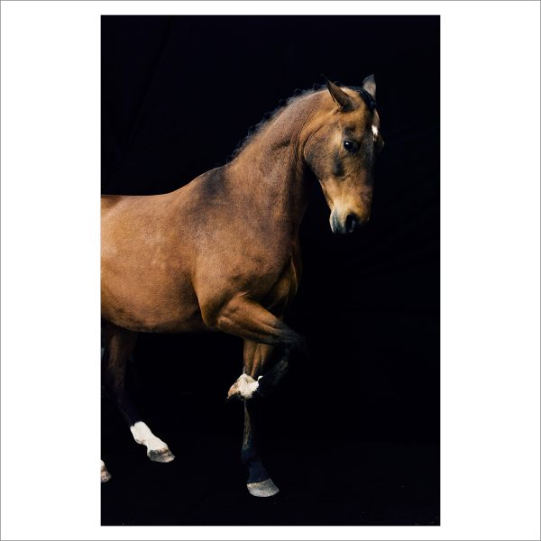 THE HORSE - 160 - LIMITED EDITION PRINT