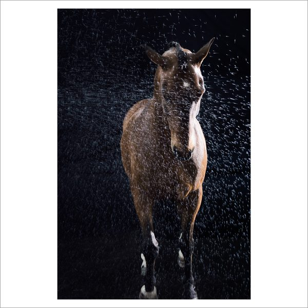 THE HORSE - 161 - LIMITED EDITION PRINT