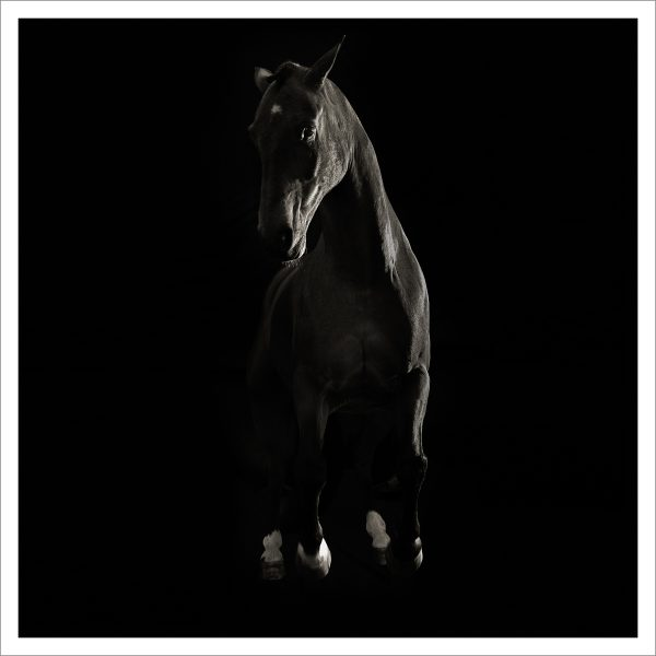 THE HORSE - 162 - LIMITED EDITION PRINT