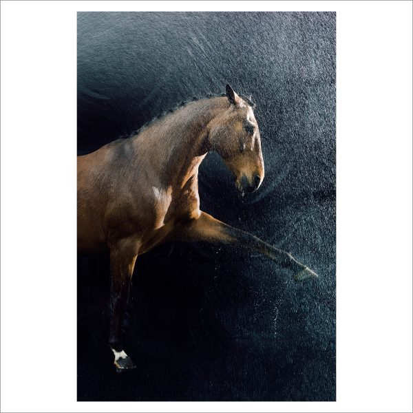 THE HORSE - 164 - LIMITED EDITION PRINT