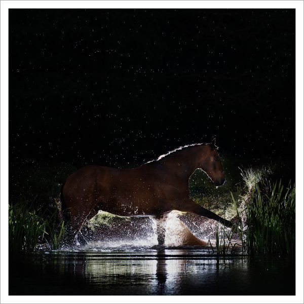 THE HORSE - 165 - LIMITED EDITION PRINT