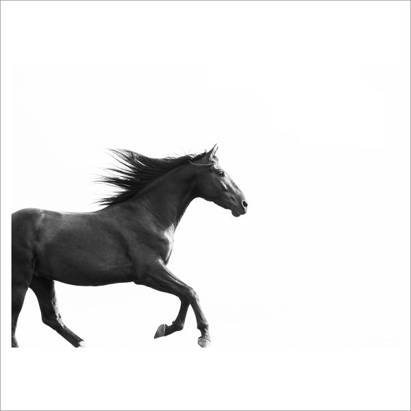 THE HORSE - 168 - LIMITED EDITION PRINT