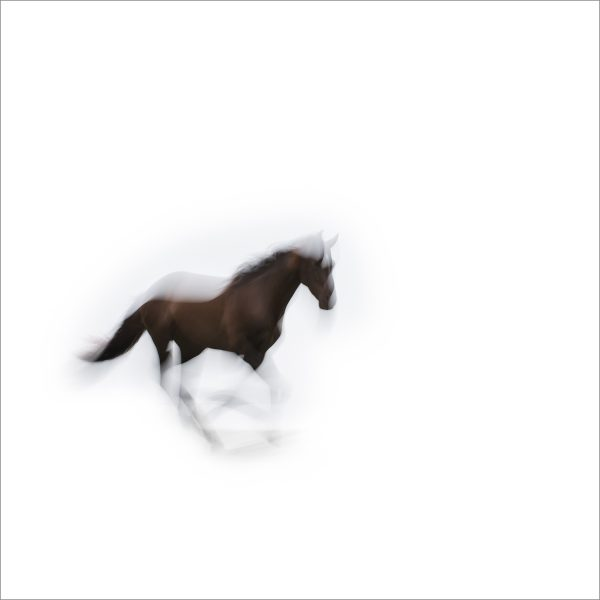 THE HORSE - 170 - LIMITED EDITION PRINT