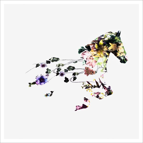 THE FLOWER HORSE SERIES - 3 - LIMITED EDITION PRINT